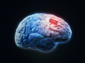 Human brain with microchip, illustration